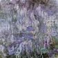 Claude Monet, Nympheas, Reflections of Willows | Water Lilies, 1916, (W 1862) oil on canvas, 78.7 x 78.7 in. / 200 x 200 cm, US$800