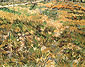 Vincent van Gogh, Meadow in the Garden of Saint-Paul Hospital, 1890, oil on canvas, 25.4 x 31.9 in. / 64.5 x 81 cm, US$320